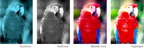 Image Tones Highlights